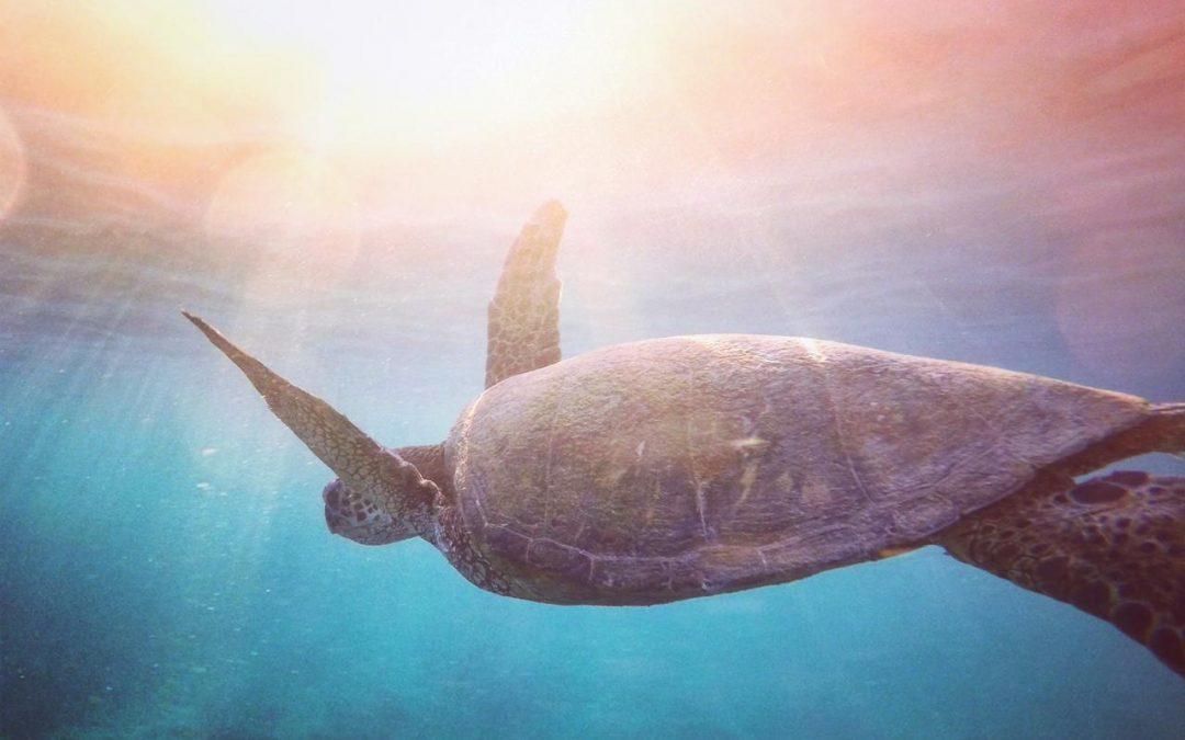 Cientistas criam pílula de insulina inspirados em casco de tartaruga